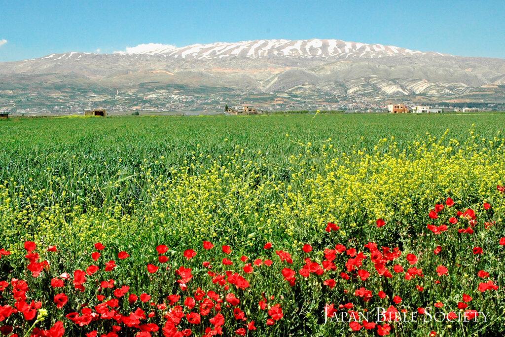 レバノン山脈(レバノン)
