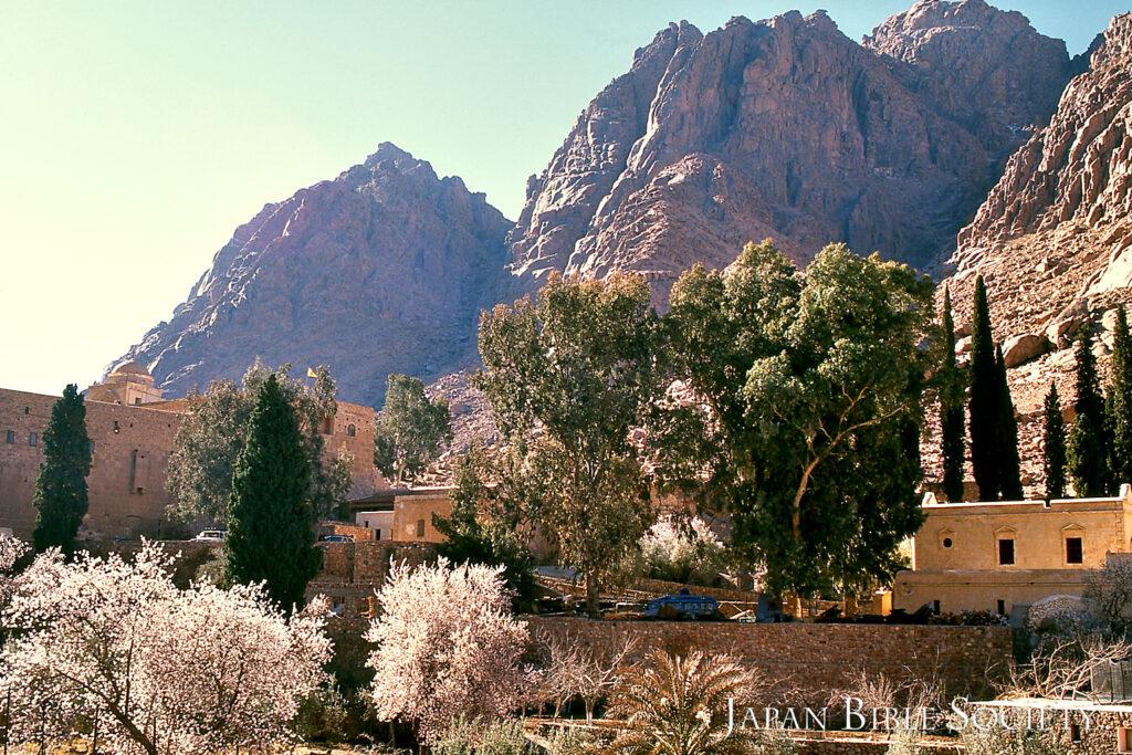 アーモンドの花咲くセント・カテリーナ寺院 (エジプト)