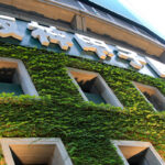 外壁の蔦の管理はグラウンドの整備で有名な阪神園芸株式会社